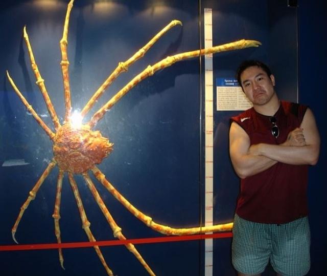 Огромные создания, которые удивляют своими размерами (20 фото)