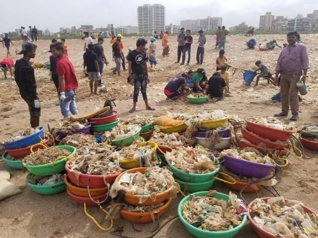 На очищенный от мусора пляж в Мумбаи вернулись черепахи (11 фото)
