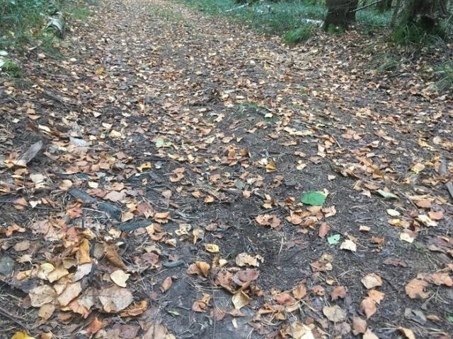Будьте бдительны, гуляя по лесу (6 фото)