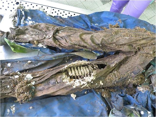 Ученые обнаружили человеческую мумию, в которой поселилась белка, осы и пчелы (3 фото)