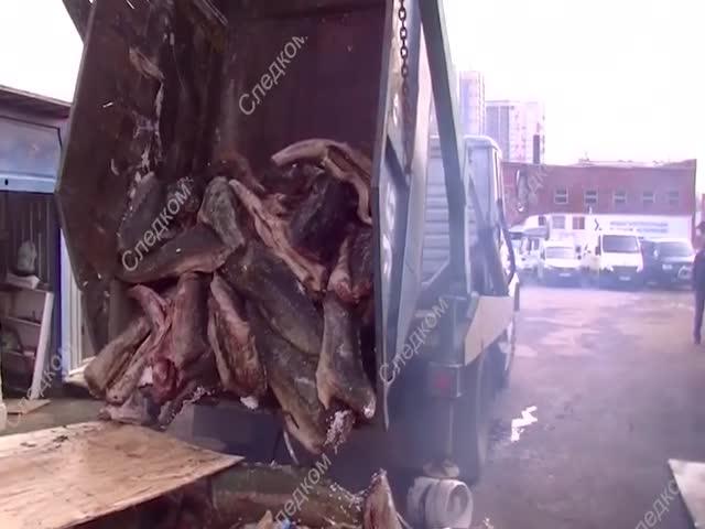 В Москву из Хабаровска завозили осетров под видом мусора