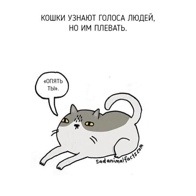 Интересные факты о животных в рисунках (11 картинок)