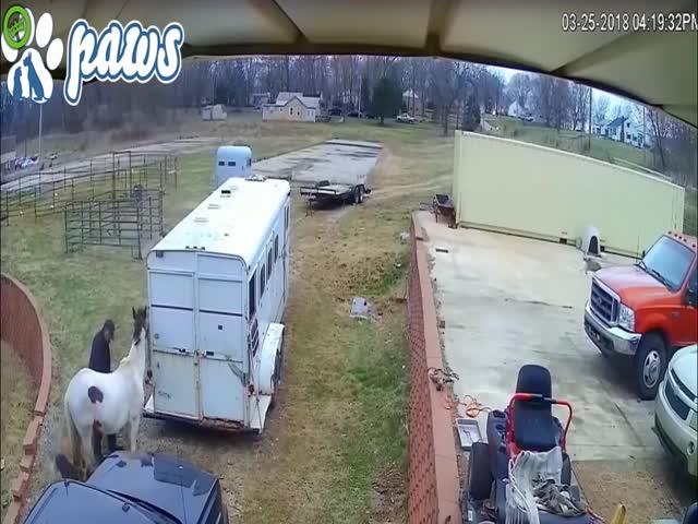 Питбуль напал на лошадь, но она оказалась не из робкого десятка