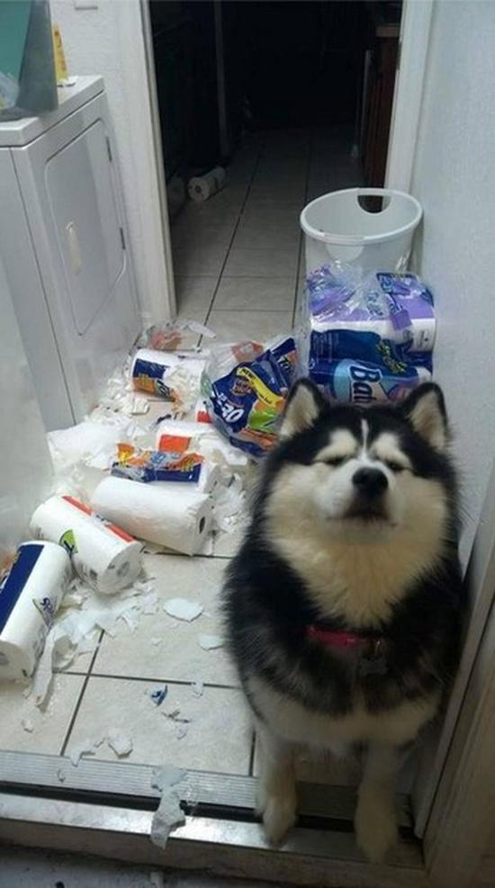 Животные, которые готовы делать пакости, как только вы отвернетесь (18 фото)