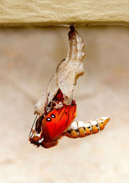 Рождение бабочки (10 фото)