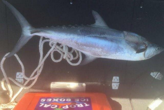 Макрель чуть не убила рыбачку из Австралии (4 фото)