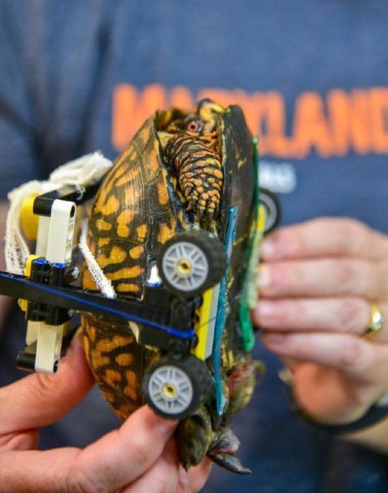 """""""Инвалидная коляска"""" для черепахи из конструктора LEGO (5 фото)"""