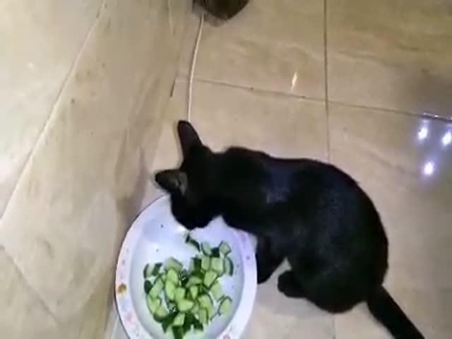 Кот, который обожает огурцы