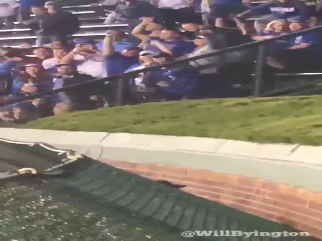 Фанаты бейсбола отвлеклись от игры