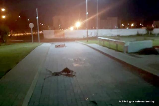 Жительница Минска заехала на заправку с разорванной в клочья покрышкой (3 фото)