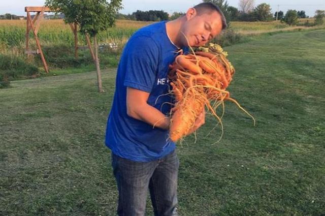 Морковь, которая попала в книгу рекордов Гиннесса (3 фото)