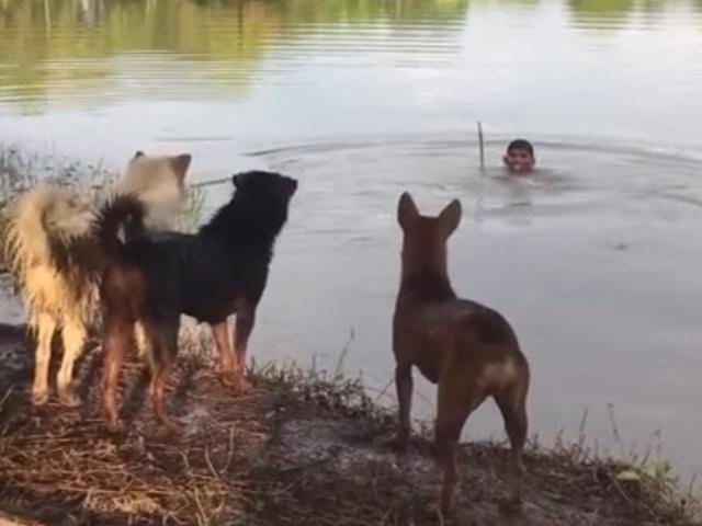 Парень решил удивить собак фокусом в воде