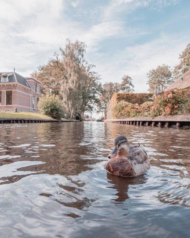 Гитхорн - деревня в Нидерландах, в которой нет дорог (6 фото)