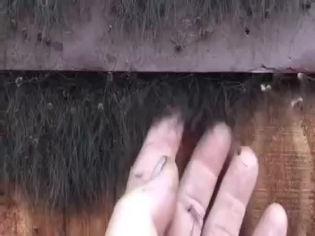 Худший кошмар для человека, который боится пауков