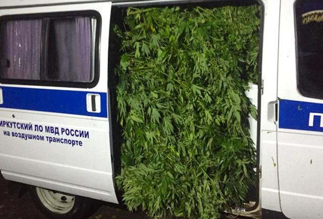 Оперативники вывезли полную Газель марихуаны с плантации под Иркутском (3 фото)