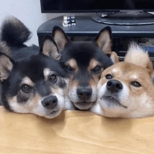Смешные и позитивные гифки с собаками (13 гифок)