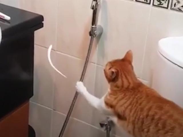 Кажется, ваш кот сломался!
