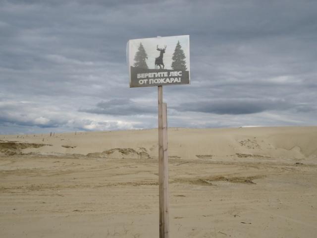 Куда подевался лес? (7 фото)