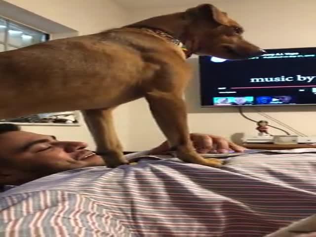 Пес недоволен, что хозяин больше внимания уделяет своему смартфону