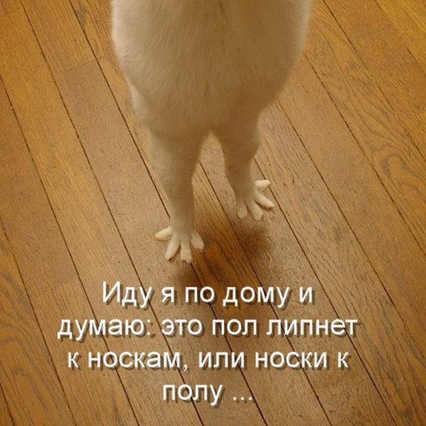 Специфический и нестандартный юмор (35 фото)