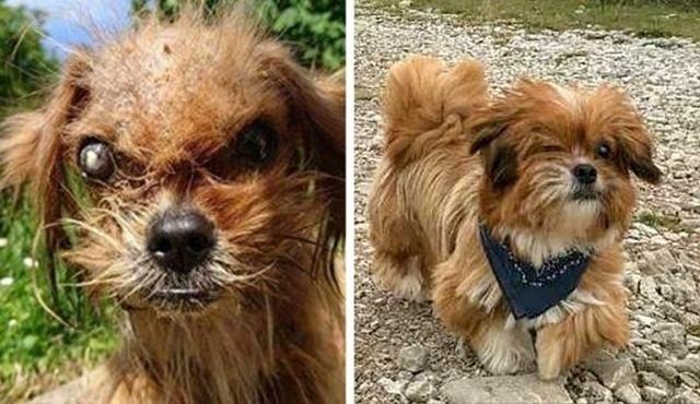 Животные, которые нуждались в помощи человека: до и после (14 фото)
