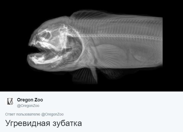 Рентгеновские снимки животных, которые вас точно удивят (14 фото)