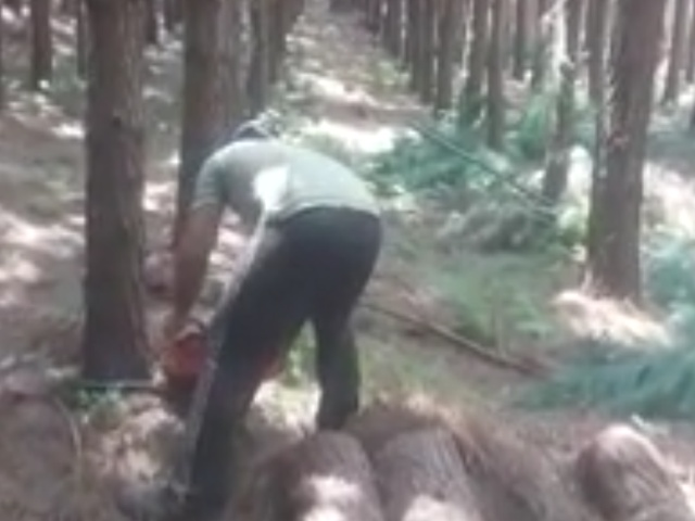 Валка леса 100 уровня