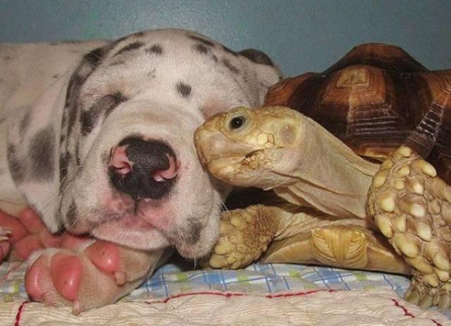 Позитивная дружба животных (27 фото)