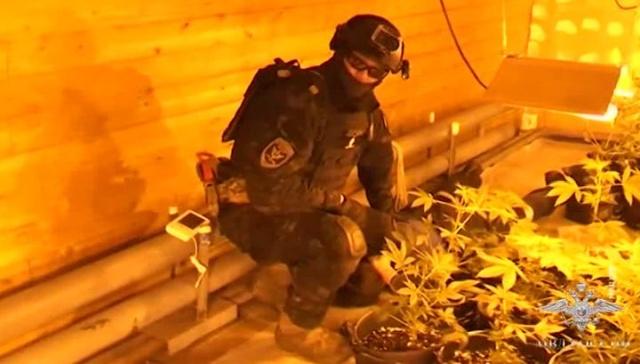 В Архангельске оперативники взяли на абордаж плавучую плантацию марихуаны (2 фото + видео)