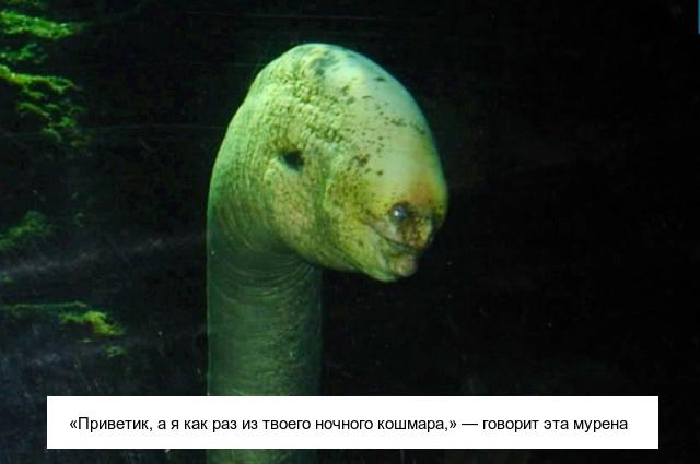 Необычные существа, которые выглядят очень странно (18 фото)