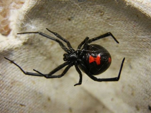 Хотел уничтожить пауков при помощи паяльной лампы, но слегка перестарался (5 фото)