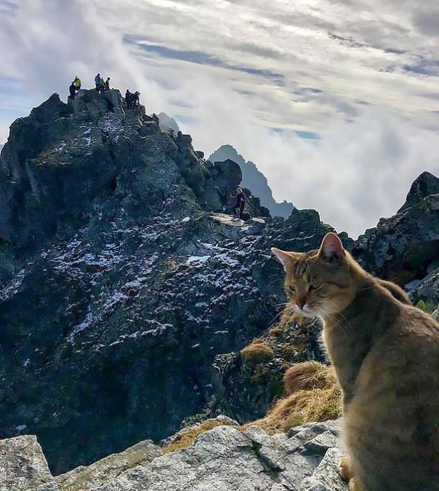 Неожиданная встреча на вершине горы Рысы в Польше (4 фото)