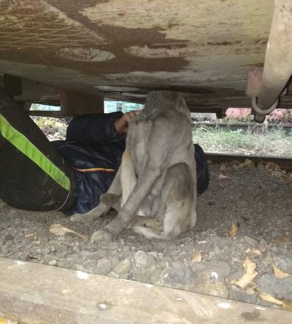 Спасение собаки, которая застряла на территории завода (9 фото)