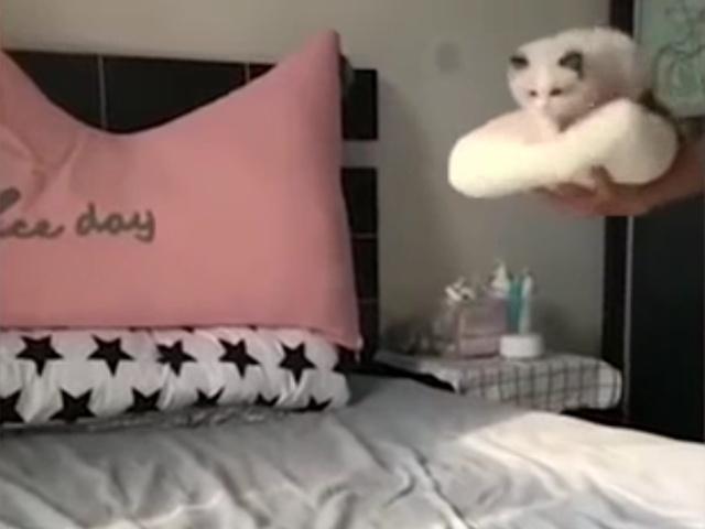 Кошачья грация во всей красе