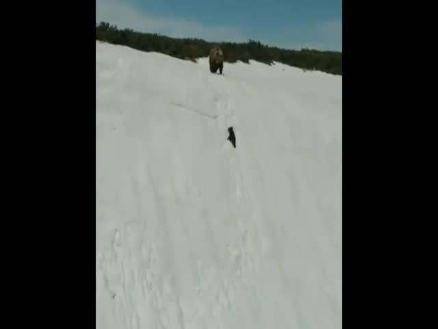 Медвежонок, который не сдался