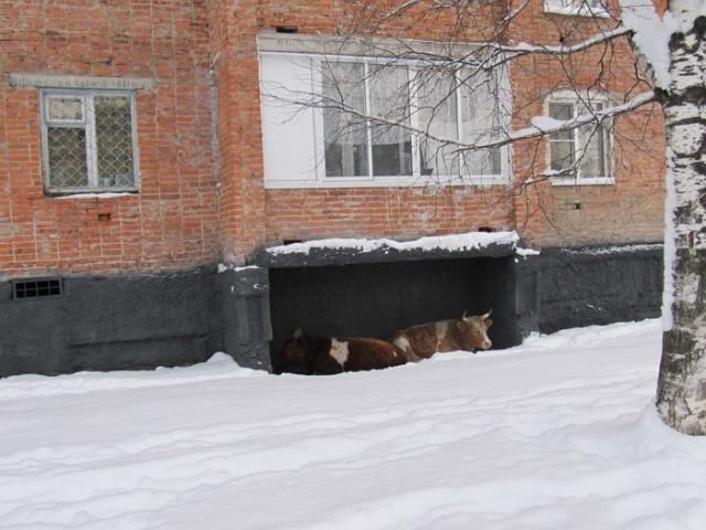 Когда внезапно наступила зима (4 фото)