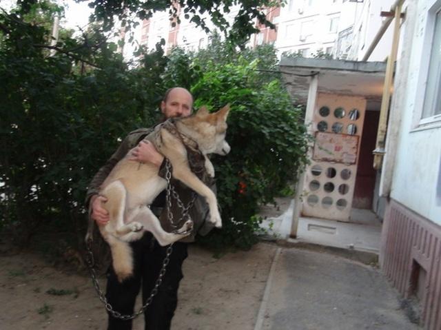 Житель Волгограда держит настоящего волка в качестве домашнего питомца (6 фото)