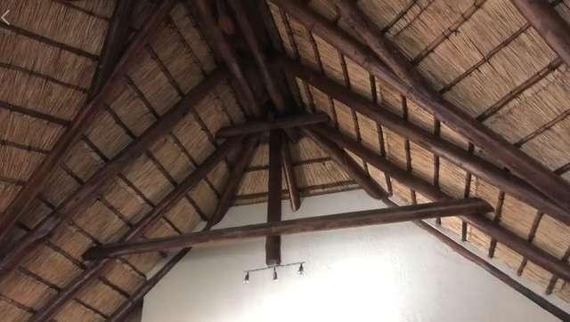 """Необычные """"квартиранты"""" в доме фотографа из Южной Африки (6 фото + видео)"""