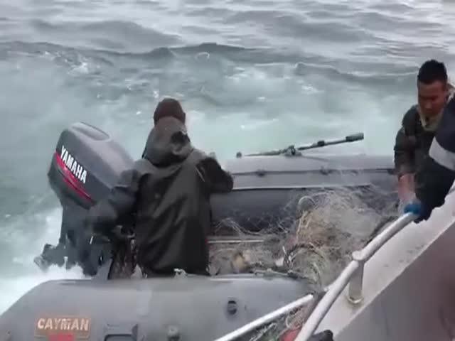 Жесткое задержание браконьеров сотрудниками береговой охраны