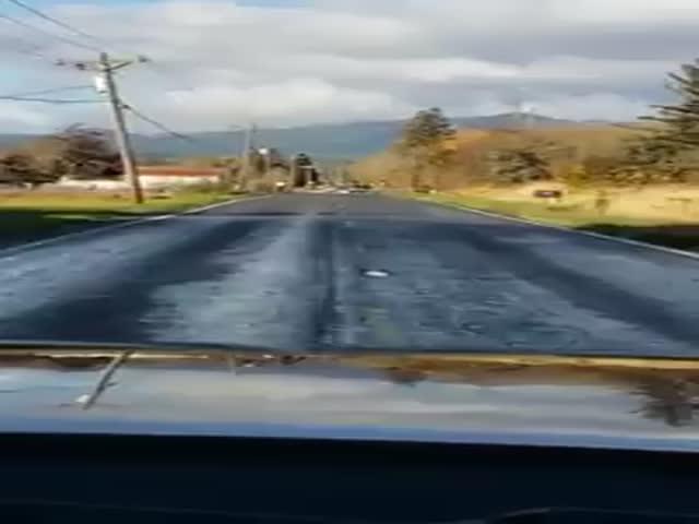 Рыба перебирается через дорожное полотно