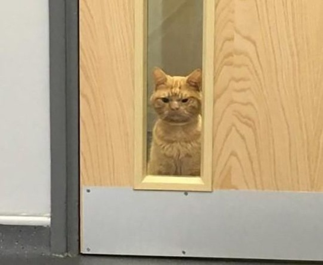Кот Сол - самый суровый кот интернета (5 фото)