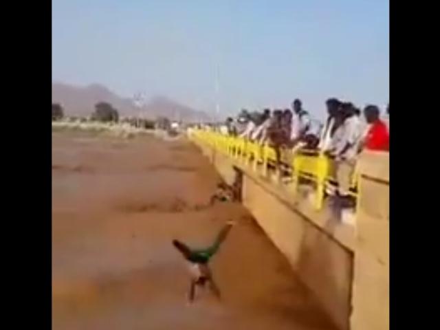 Разбежавшись, прыгнуть вниз с моста...