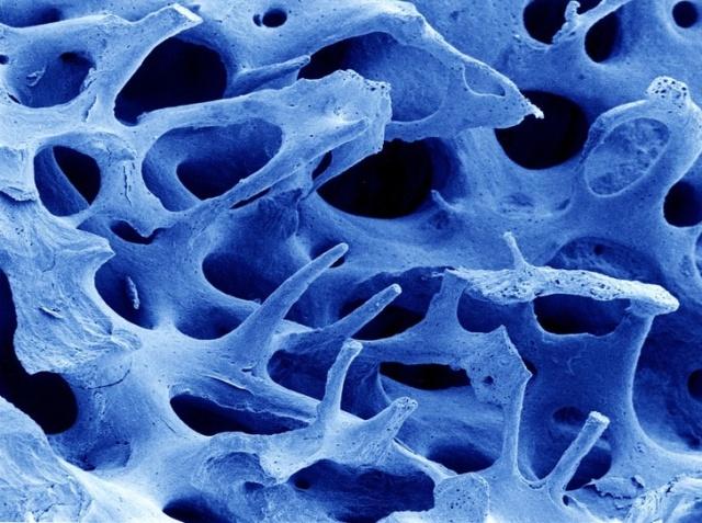 Органы и различные процессы человеческого тела под микроскопом (16 фото)