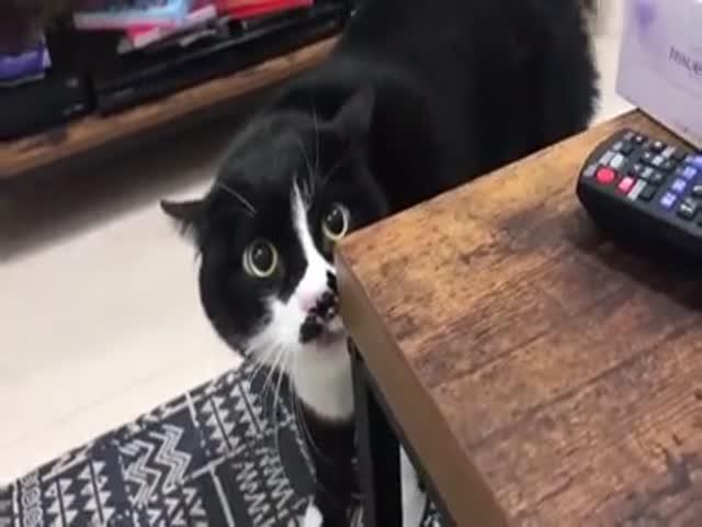Сольное выступление кота из Санкт-Петербурга