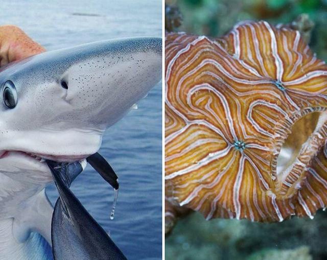 Интересные обитатели водных просторов нашей планеты (15 фото)