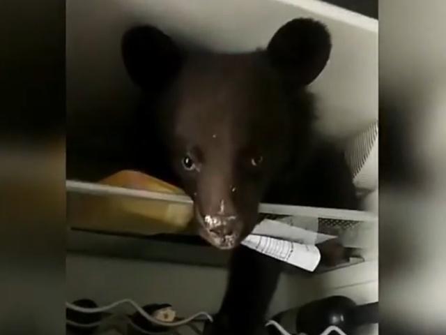Когда завел медведя в качестве питомца, а теперь возмущаешься