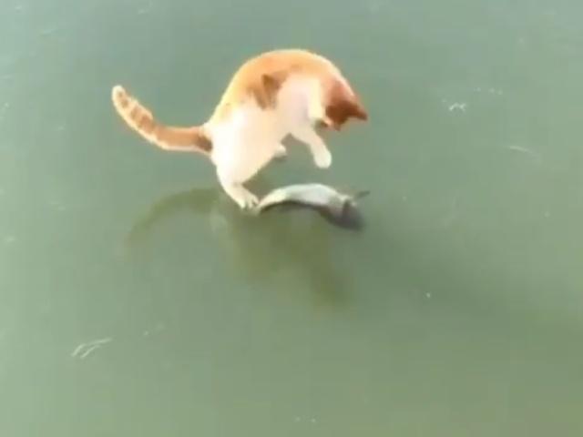 Поймай рыбку, если сможешь!