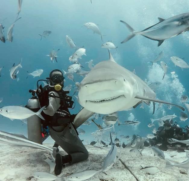 Binlerce kelime yerine inanılmaz resimler (43 fotoğraf)