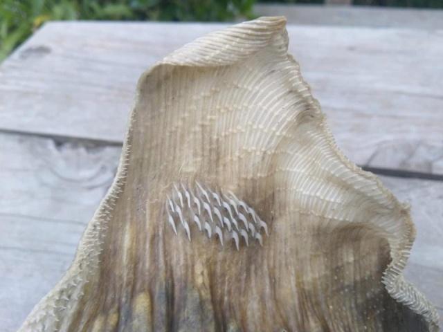 На побережье в Новой Зеландии был найден скелет странного морского чудища (5 фото)