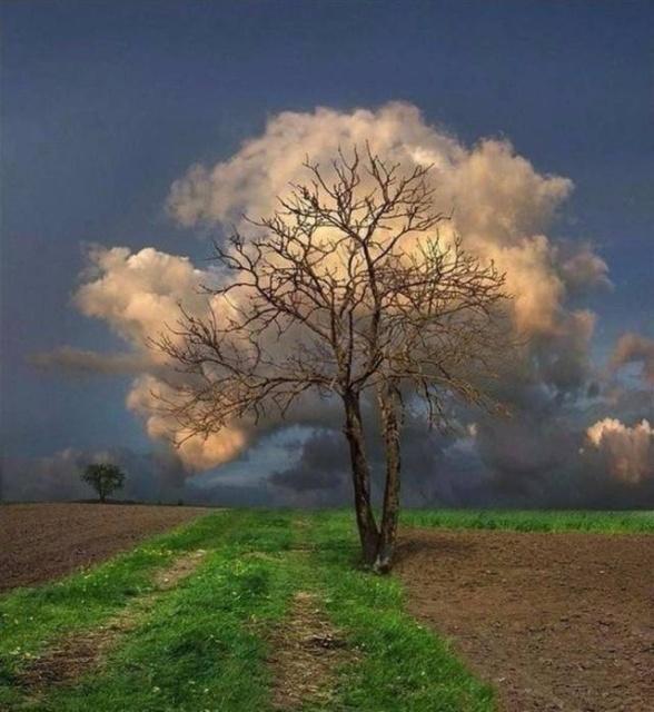 thousand_words_20 Binlerce Kelimeyle Anlatılamayan Resimler 2 (48 fotograf)